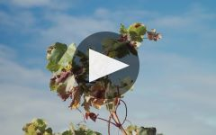 Vivanco Winery Video