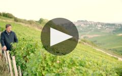 Henri Bourgeois Winery Video