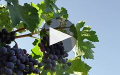 La Crema Winery Video