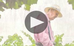 Jim Barry Winery Video