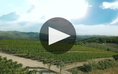 Frescobaldi Winery Video