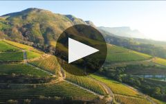 Klein Constantia Winery Video