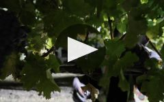 Amici Winery Video