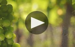 Castello Banfi Winery Video