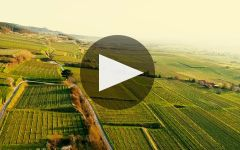 Markus Huber Winery Video