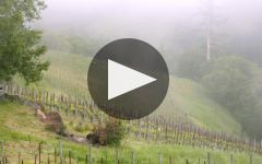 Flowers Winery Video