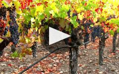 Textbook Winery Video