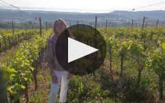 Zenato Winery Video