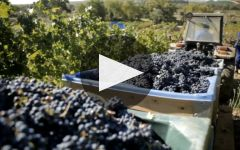 Kanonkop Winery Video