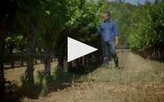 Clos du Bois Winery 40th Anniversary Video Winery Video