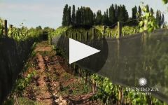 Agua de Piedra Winery Video