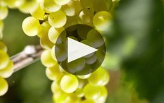 Louis Latour Winery Video