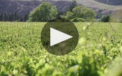 Pegasus Bay  Winery Video