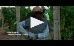 Moss Wood Winery Video