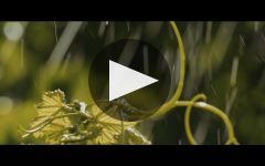Bortoluzzi Winery Video