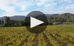 Spottswoode Estate Vineyard & Winery Winery Video
