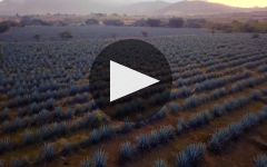 Partida Winery Video