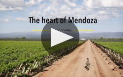 Santa Julia The Marvel of Mendoza Malbec Winery Video