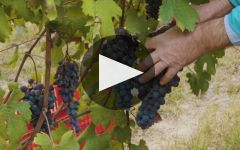 Damilano Winery Video