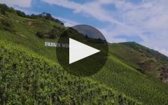 Dr Pauly-Bergweiler Winery Video