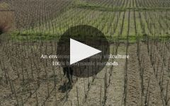 Paul Jaboulet Aine  Winery Video