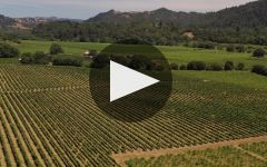 The Counselor Winery Video