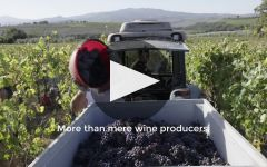 Col d'Orcia  Winery Video