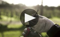 Henschke Winery Video